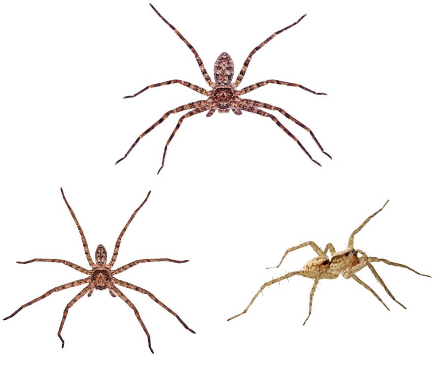 Spider bite cycle