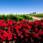 red flower spring
